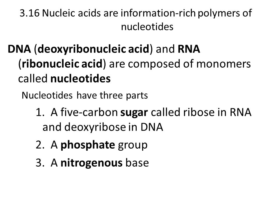 3.16 Nucleic acids are information-rich polymers of nucleotides
