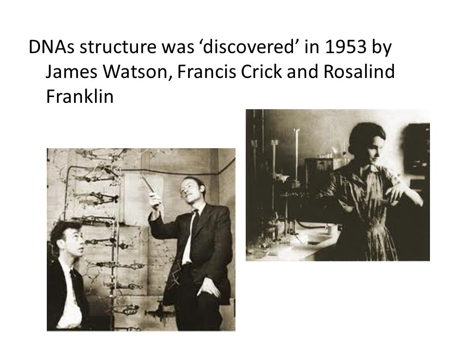 DNAs structure was 'discovered' in 1953 by James Watson, Francis Crick and Rosalind Franklin