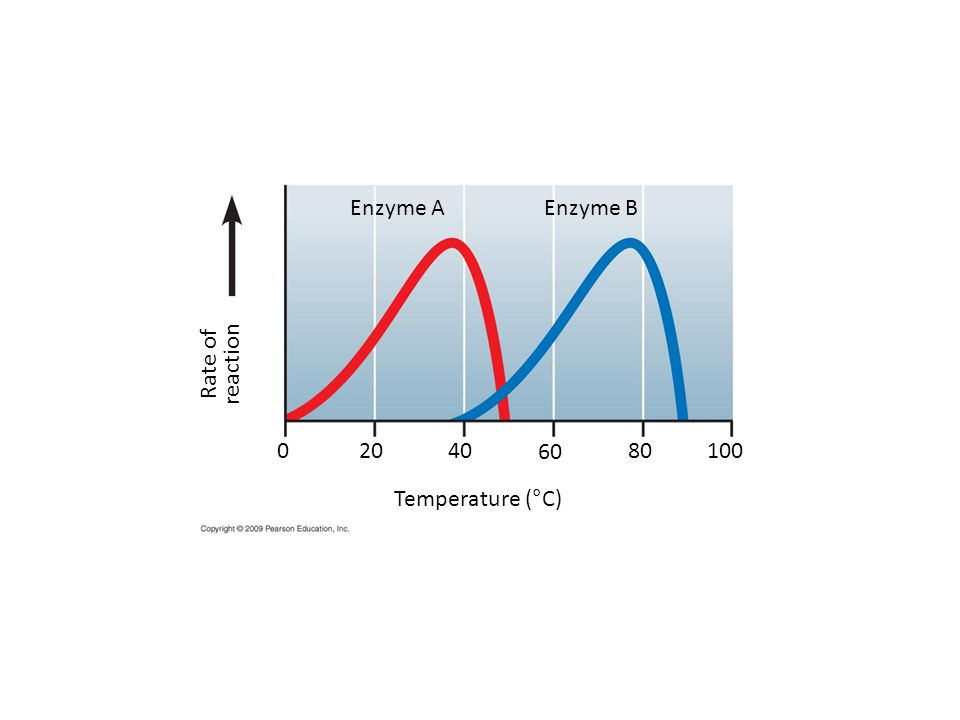 Enzyme A Enzyme B Rate of reaction 20 40 60 80 100 Temperature (°C)