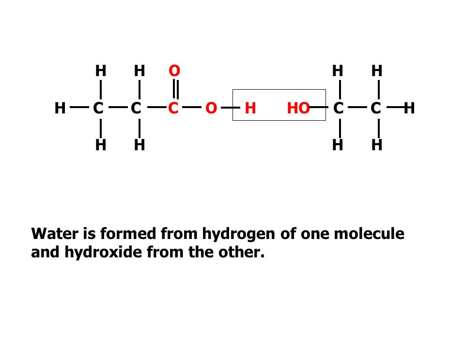 H H O H C C C O H. H H. H H. HO C C H. Water is formed from hydrogen of one molecule.