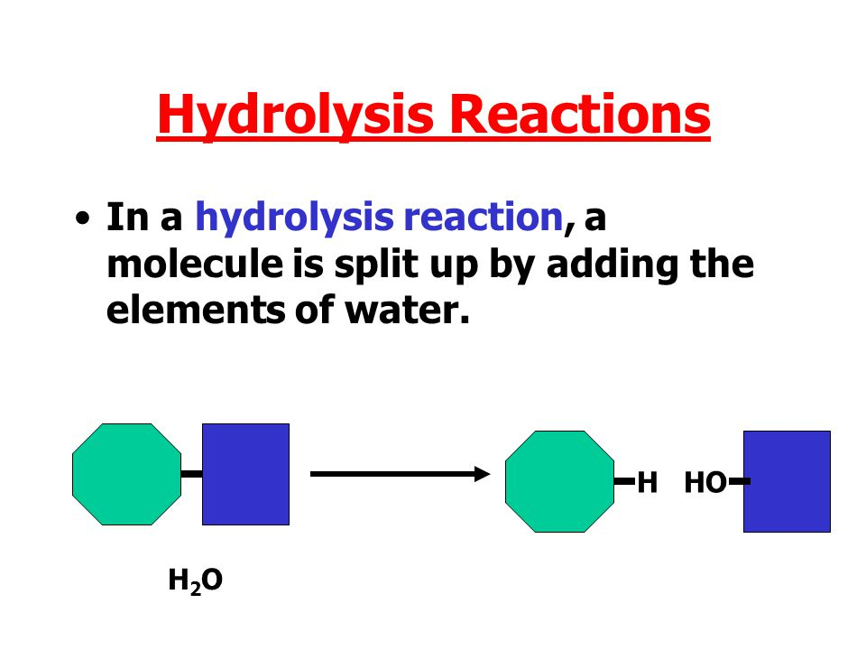 Hydrolysis Reactions In a hydrolysis reaction, a molecule is split up by adding the elements of water.