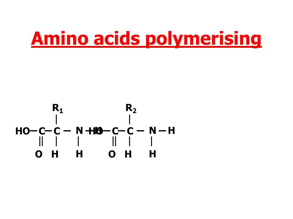 Amino acids polymerising