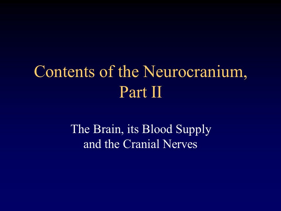 Contents of the Neurocranium, Part II