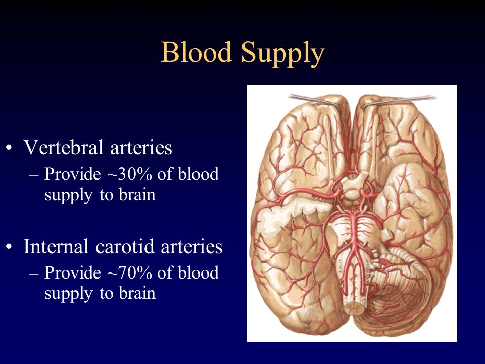 Blood Supply Vertebral arteries Internal carotid arteries