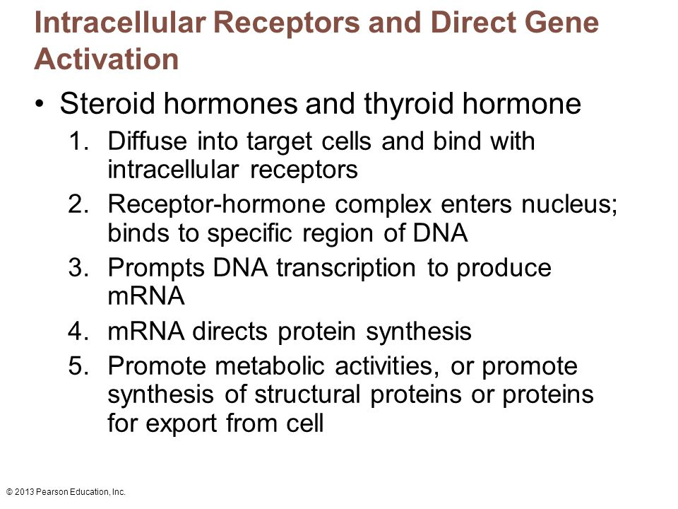 Intracellular Receptors and Direct Gene Activation