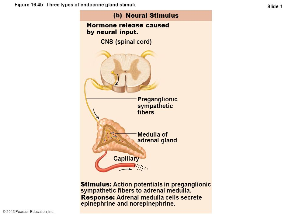 Hormone release caused by neural input.