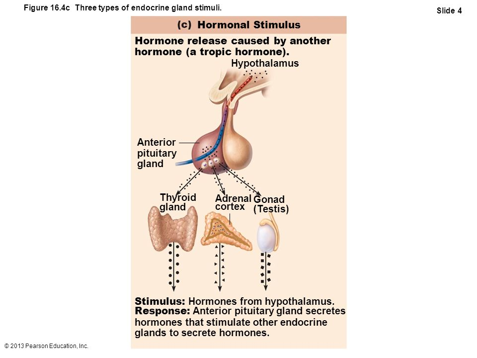 Hormone release caused by another hormone (a tropic hormone).