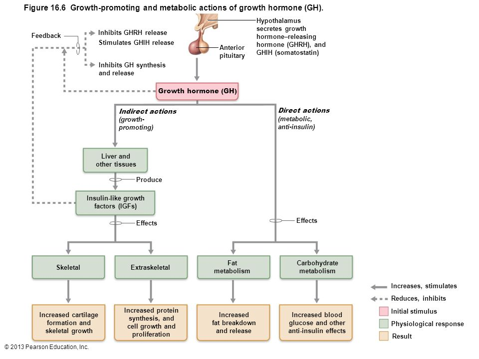 Figure 16.6 Growth-promoting and metabolic actions of growth hormone (GH).