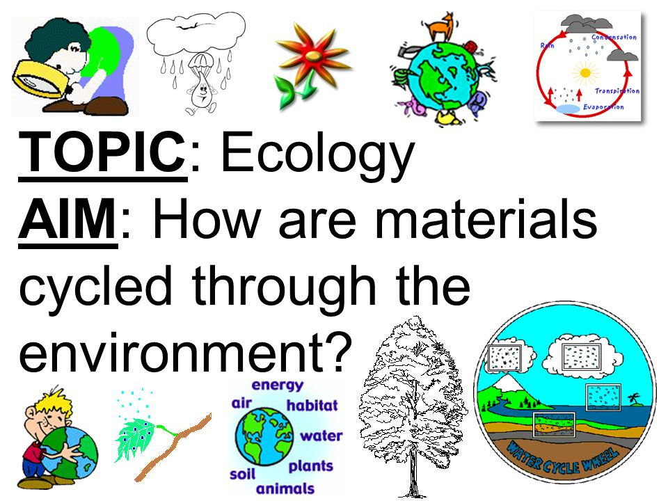 TOPIC: Ecology AIM: How are materials cycled through the environment