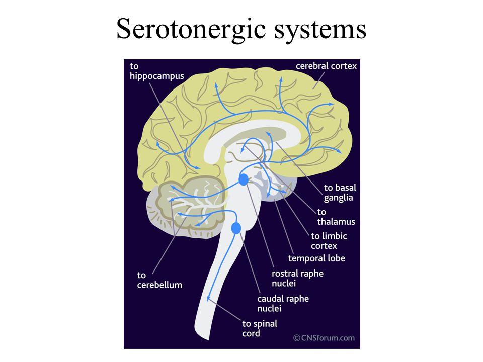 Serotonergic systems