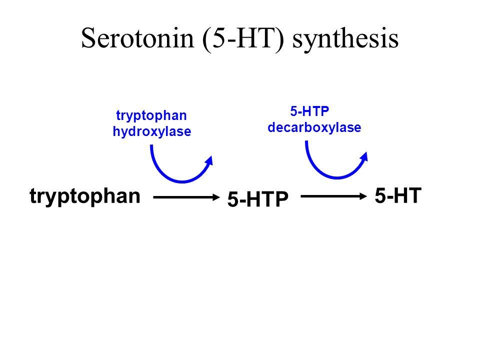 Serotonin (5-HT) synthesis
