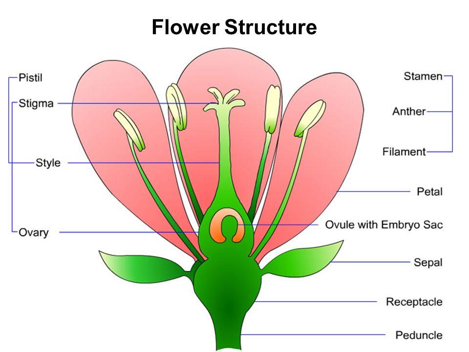 Flower Structure