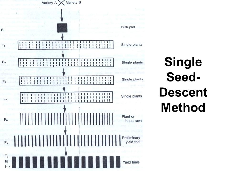 Single Seed- Descent Method