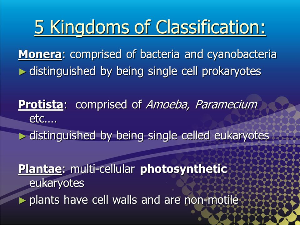 5 Kingdoms of Classification: