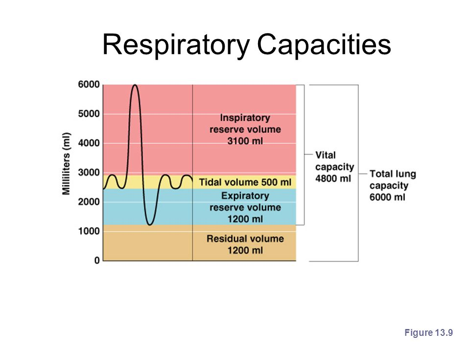 Respiratory Capacities