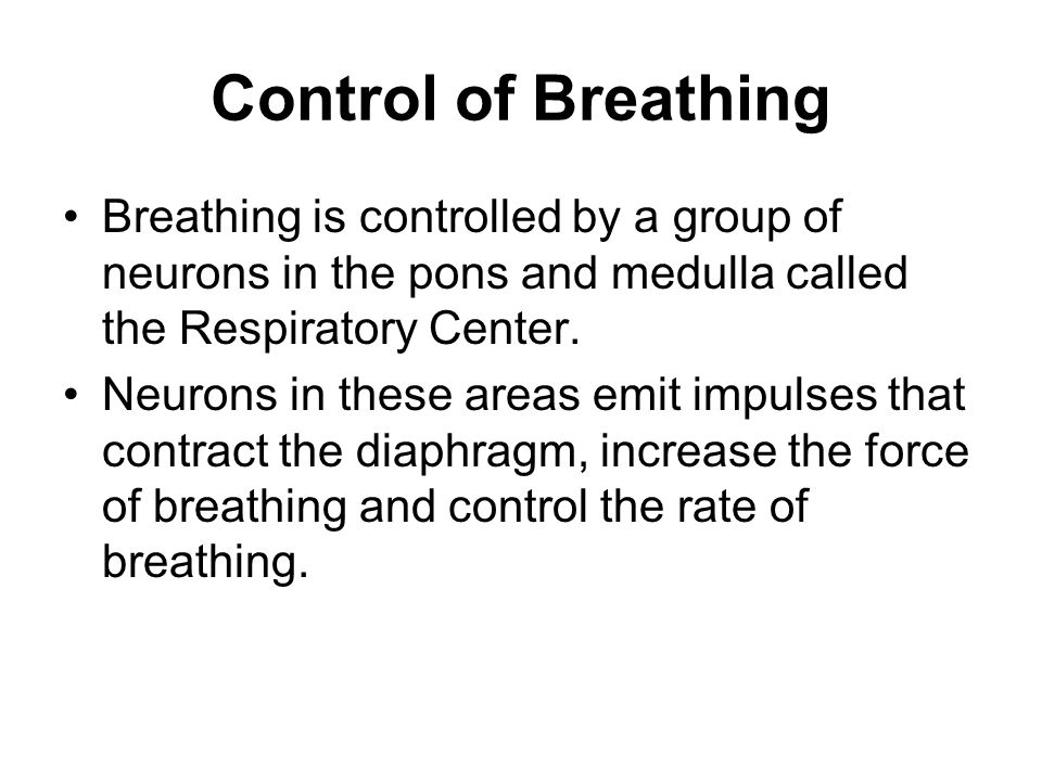 Control of Breathing Breathing is controlled by a group of neurons in the pons and medulla called the Respiratory Center.
