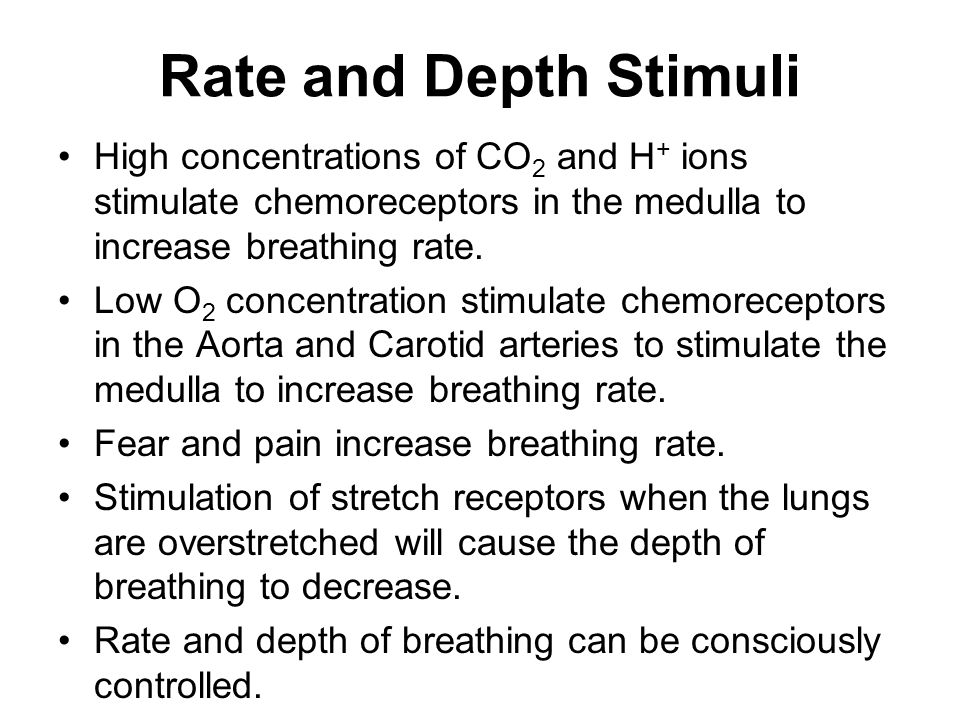Rate and Depth Stimuli High concentrations of CO2 and H+ ions stimulate chemoreceptors in the medulla to increase breathing rate.