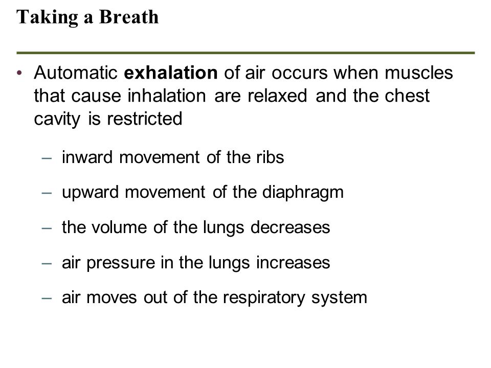 Ch 23 part II Respiration Taking a Breath.