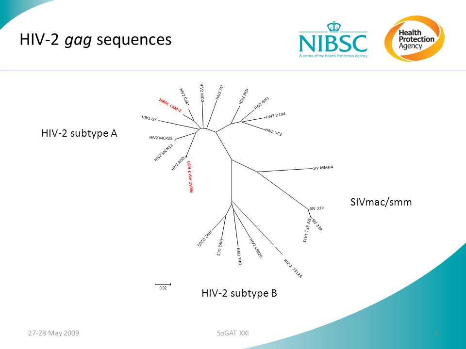 HIV-2 gag sequences HIV-2 subtype A SIVmac/smm HIV-2 subtype B