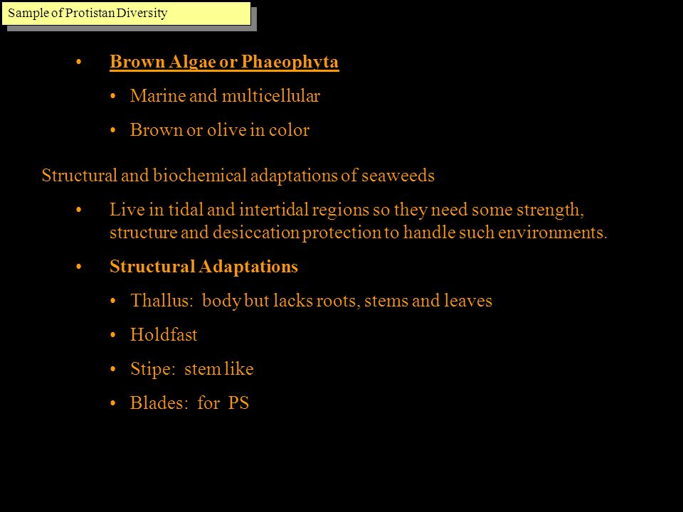 Brown Algae or Phaeophyta Marine and multicellular