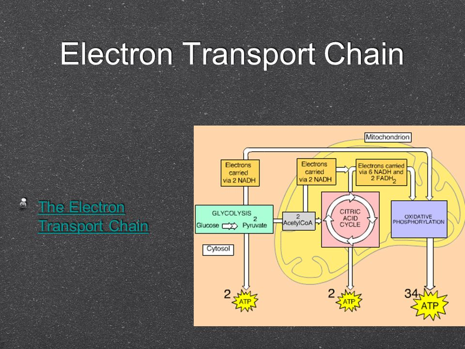 Electron Transport Chain