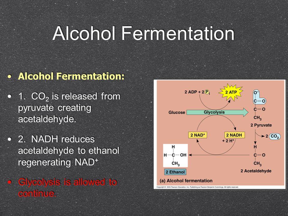 Alcohol Fermentation Alcohol Fermentation: