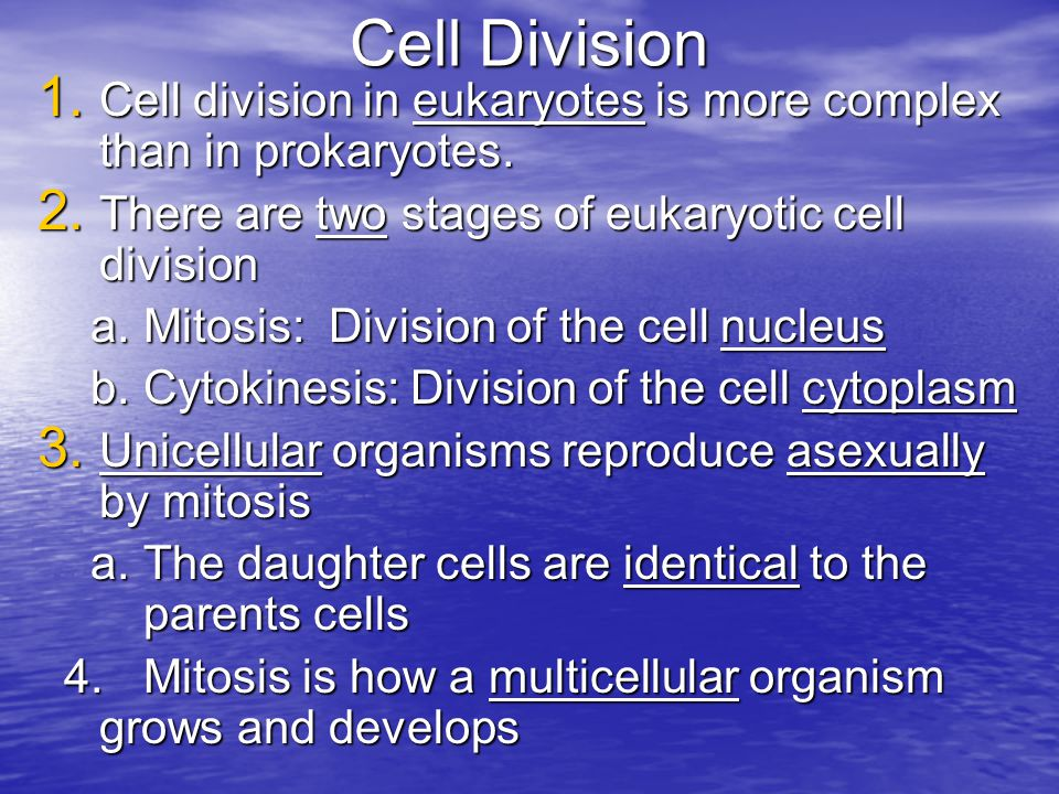 Cell Division Cell division in eukaryotes is more complex than in prokaryotes. There are two stages of eukaryotic cell division.
