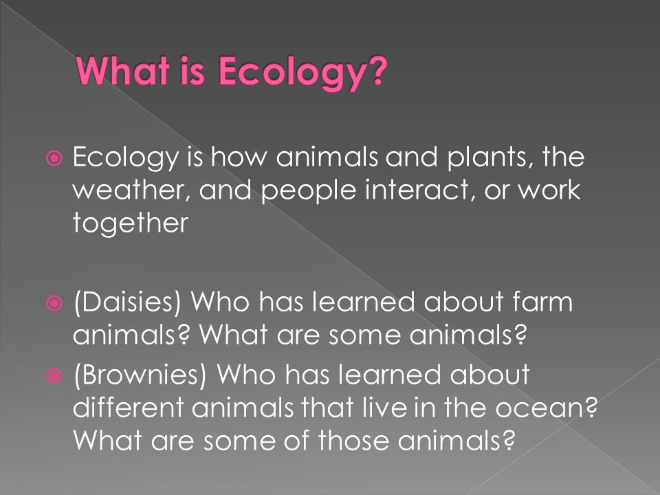 What is Ecology Ecology is how animals and plants, the weather, and people interact, or work together.