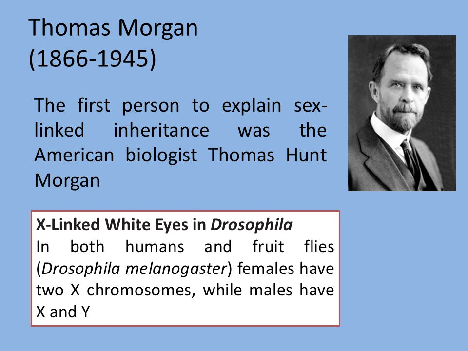 Thomas Morgan ( ) The first person to explain sex-linked inheritance was the American biologist Thomas Hunt Morgan.