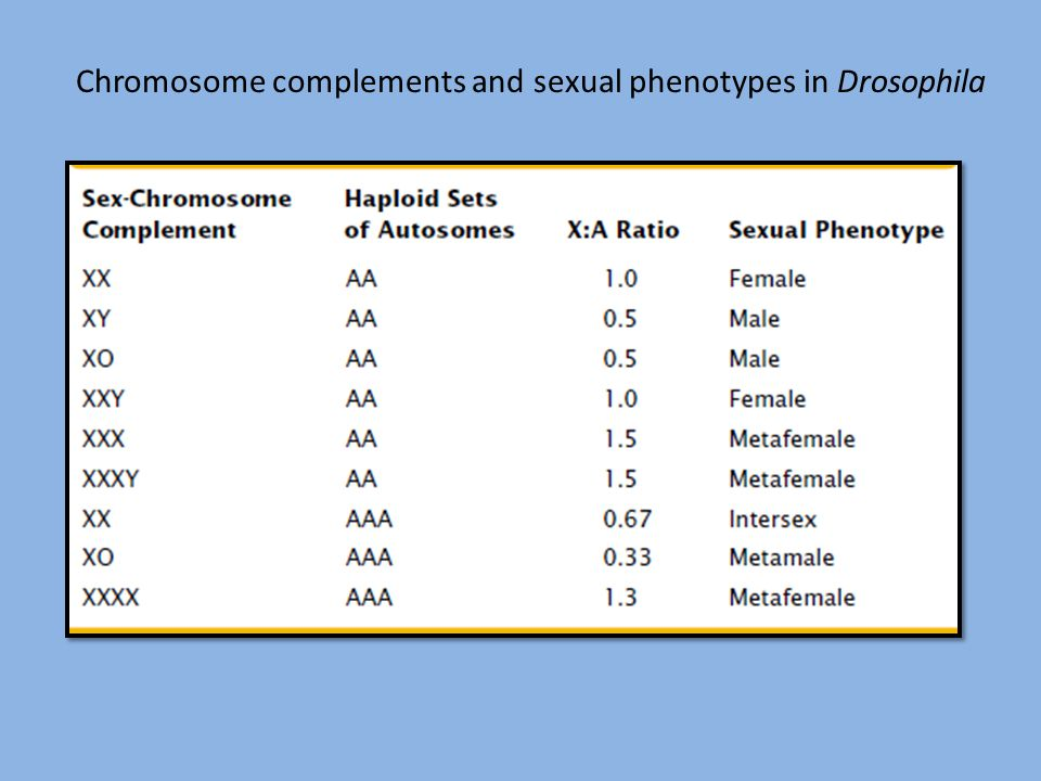 Chromosome complements and sexual phenotypes in Drosophila