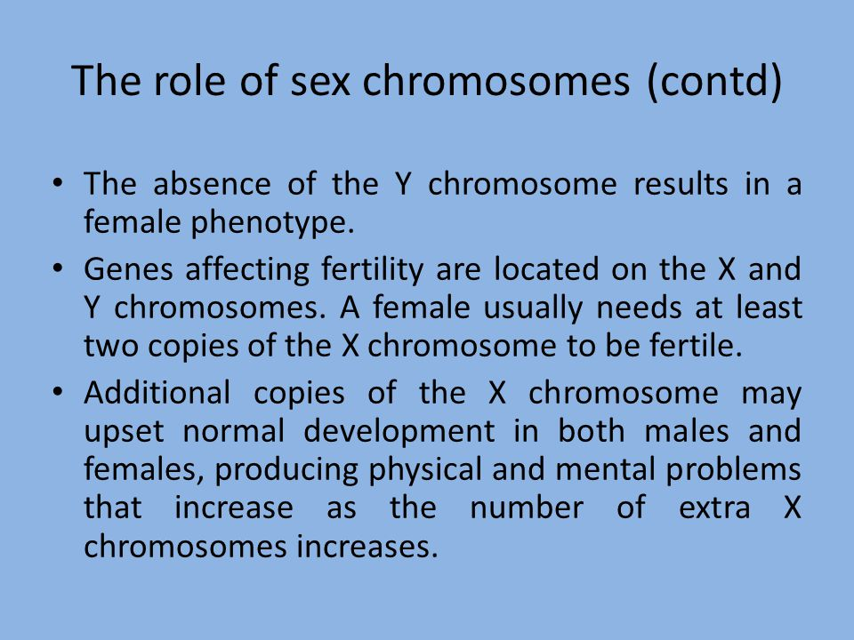 The role of sex chromosomes (contd)