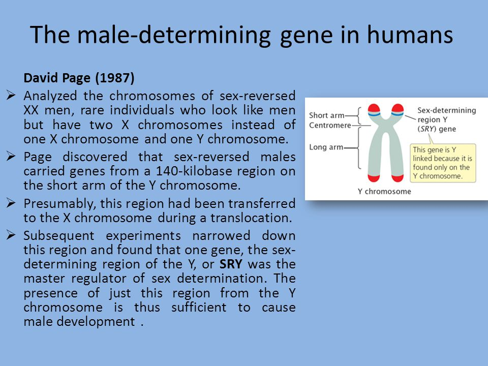 The male-determining gene in humans