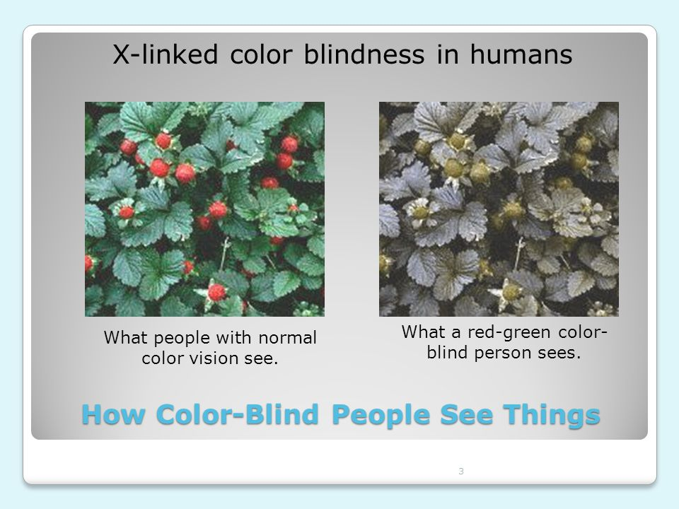 How Color-Blind People See Things