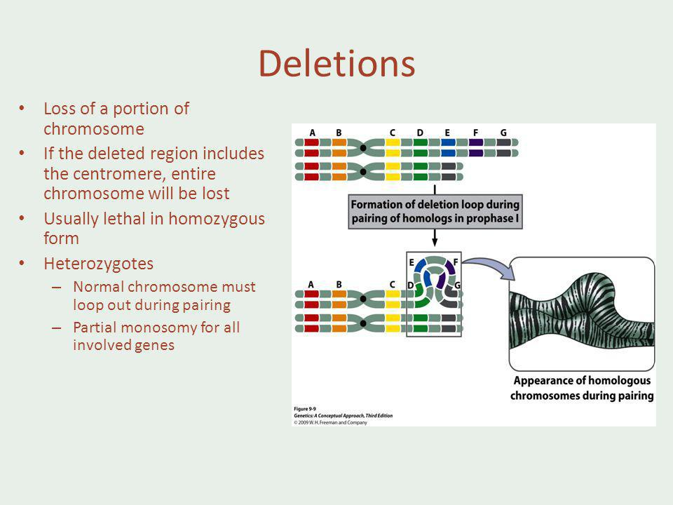 Deletions Loss of a portion of chromosome