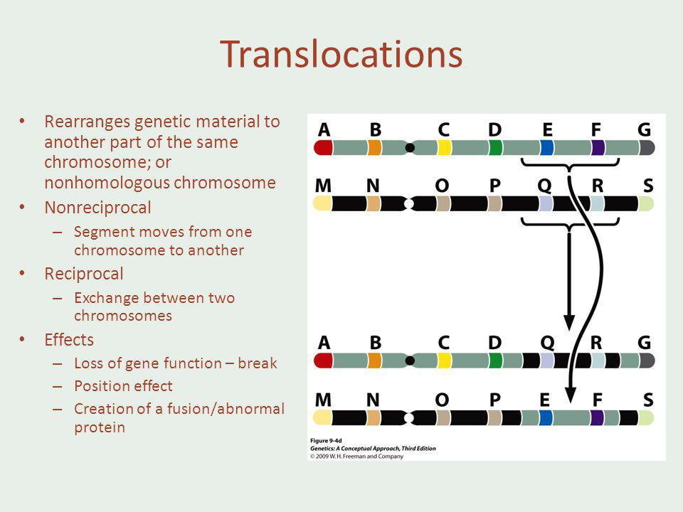 Translocations Rearranges genetic material to another part of the same chromosome; or nonhomologous chromosome.
