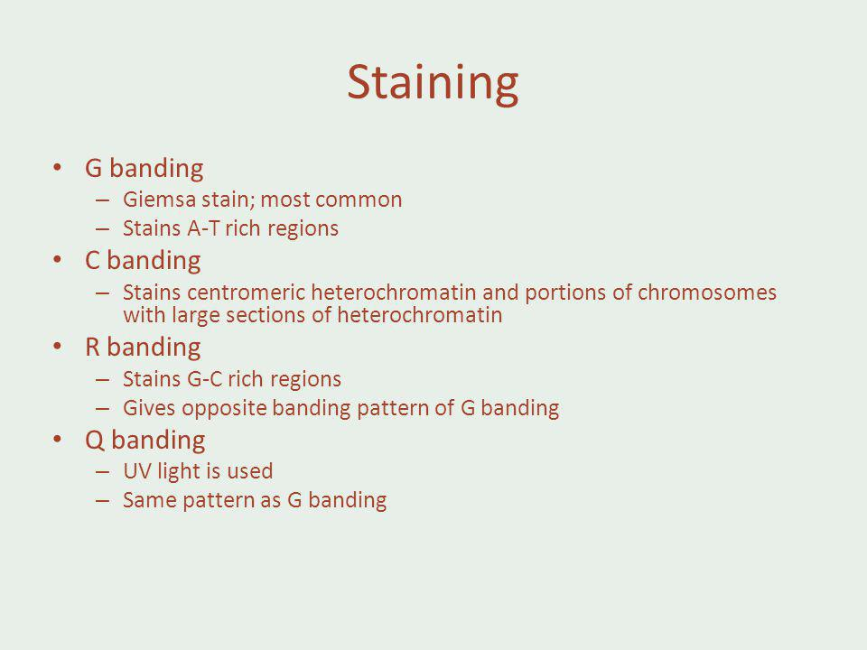 Staining G banding C banding R banding Q banding