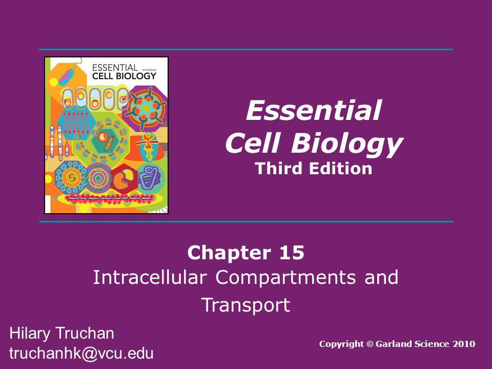 Intracellular Compartments and Transport
