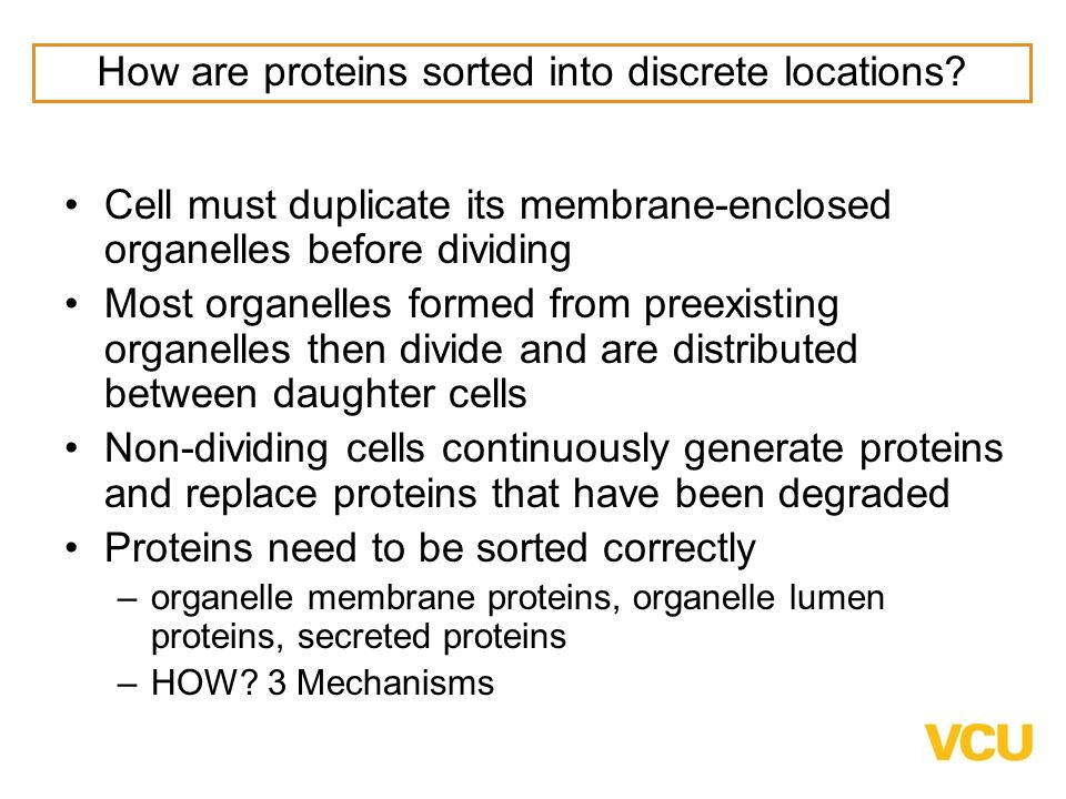 How are proteins sorted into discrete locations