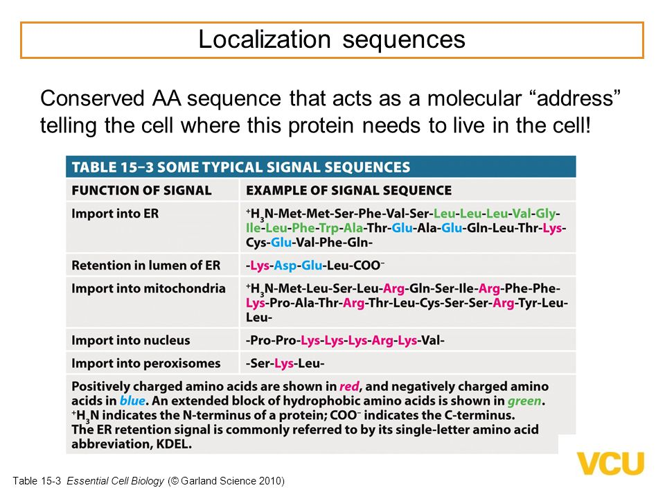 Localization sequences