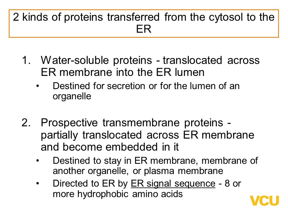 2 kinds of proteins transferred from the cytosol to the ER