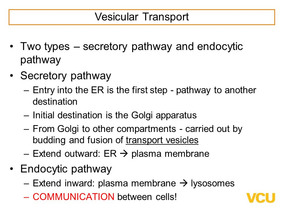 Two types – secretory pathway and endocytic pathway Secretory pathway