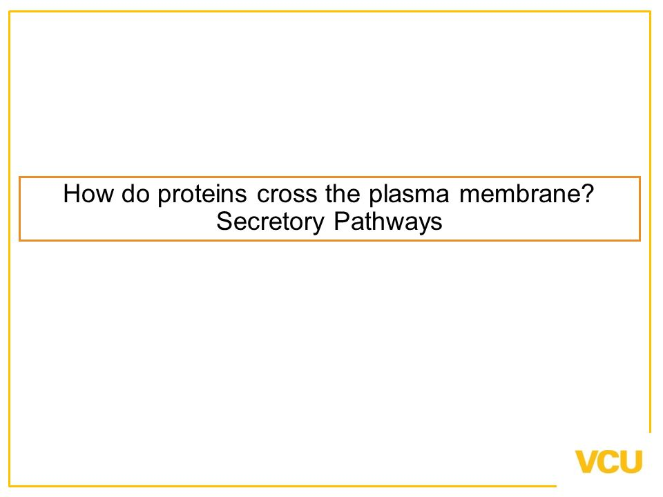 How do proteins cross the plasma membrane Secretory Pathways