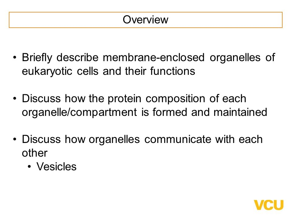 Overview Briefly describe membrane-enclosed organelles of eukaryotic cells and their functions.