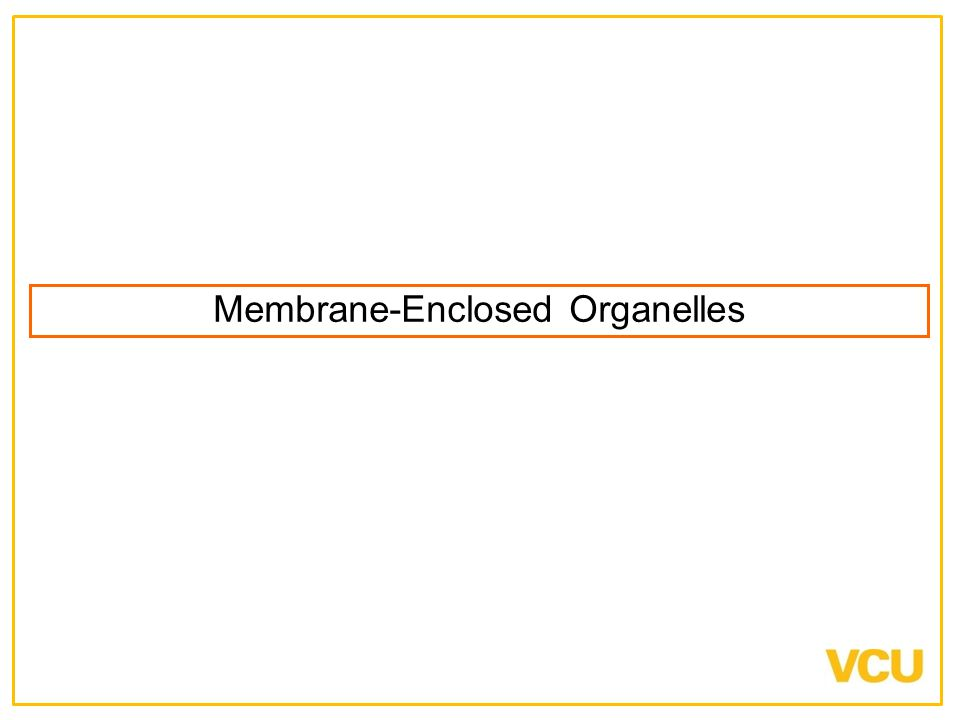 Membrane-Enclosed Organelles