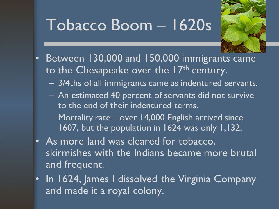 Tobacco Boom – 1620s Between 130,000 and 150,000 immigrants came to the Chesapeake over the 17th century.