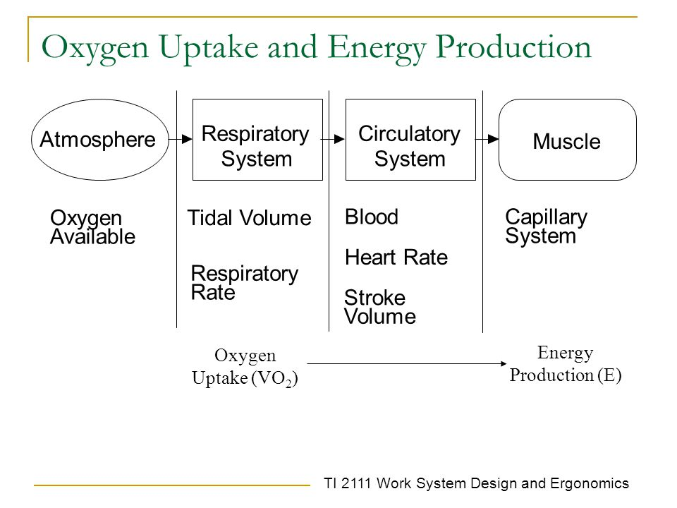 Oxygen Uptake and Energy Production