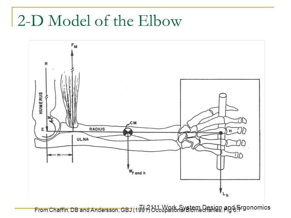 2-D Model of the Elbow From Chaffin, DB and Andersson, GBJ (1991) Occupational Biomechanics.
