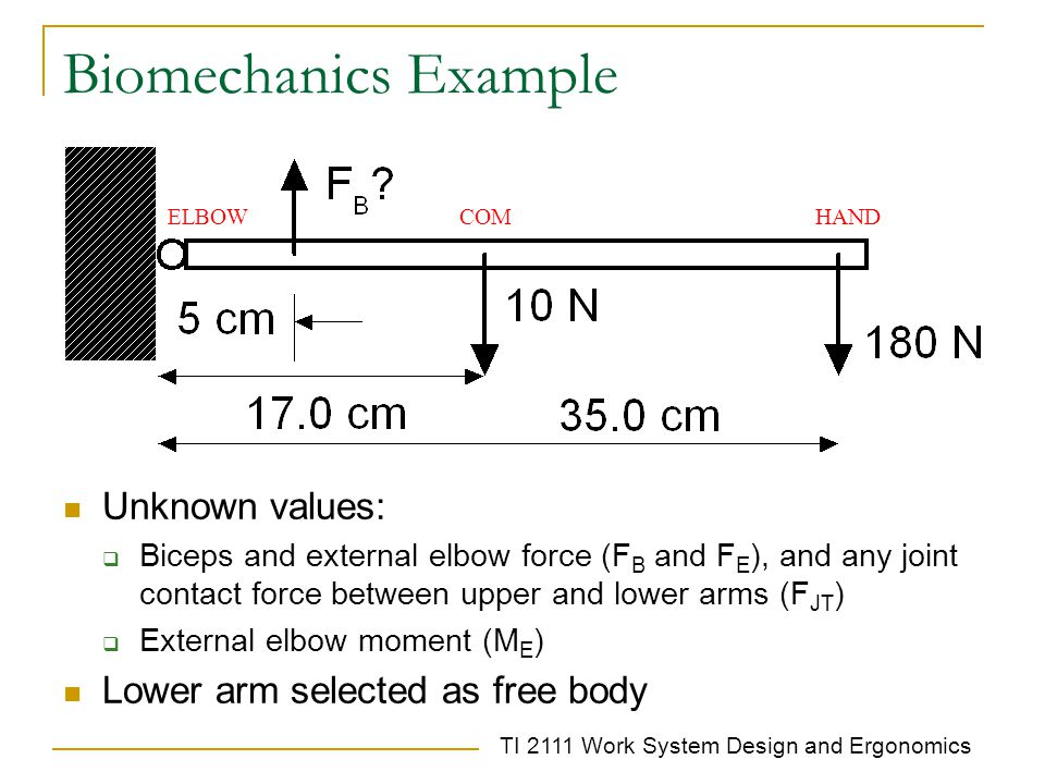 Biomechanics Example Unknown values: Lower arm selected as free body