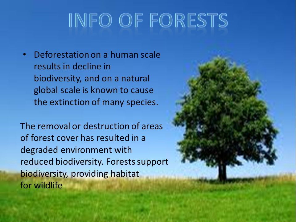 Info Of Forests