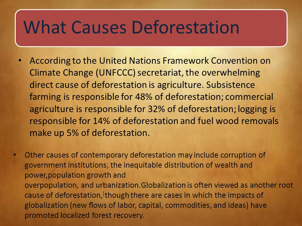 What Causes Deforestation